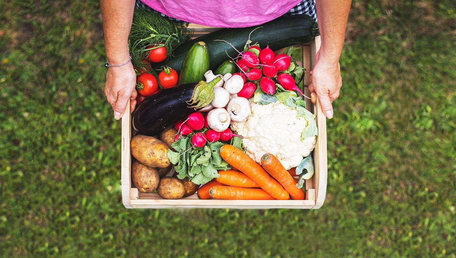 Zwei Hände halten Obsthaus Gemüsekiste mit allerlei Gemüse