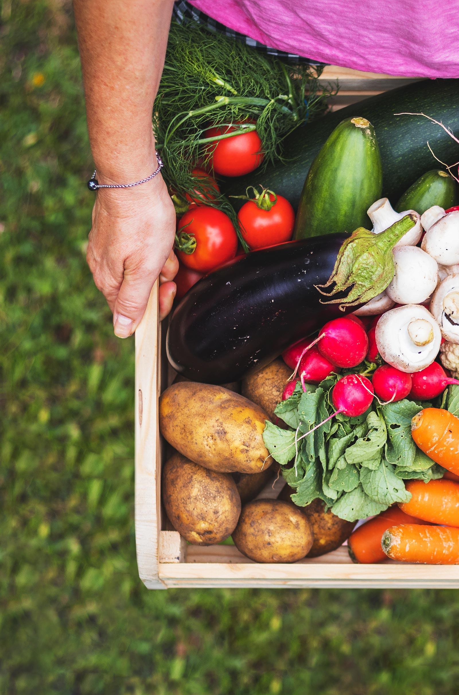 Frau hält Obsthaus Gemüsekiste aus Holz mit allerlei Gemüse